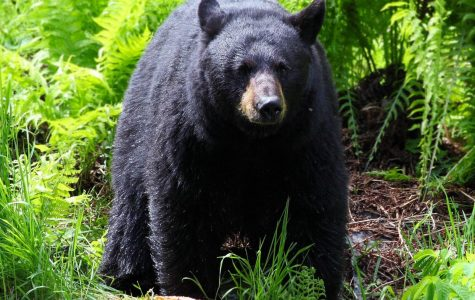 Mother Chases off Bear that Attacked Daughter