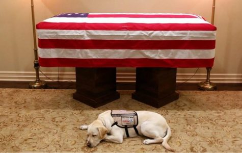 Former President George H.W. Bush Dies at 94; Service Dog Stays Until the End