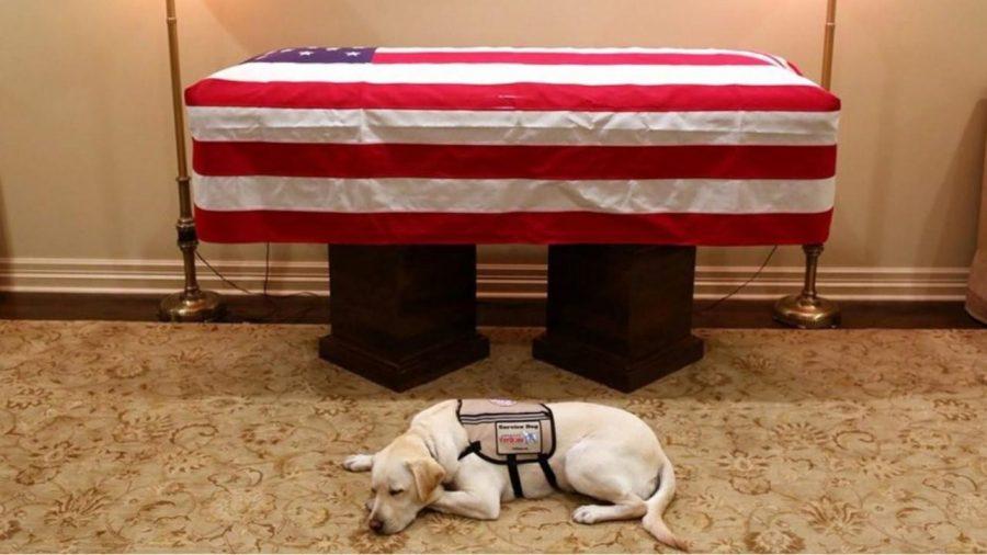 Former President George H.W. Bush Dies at 94; Service Dog Stays Until the End