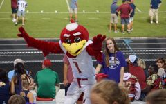 Harvey The Hawk