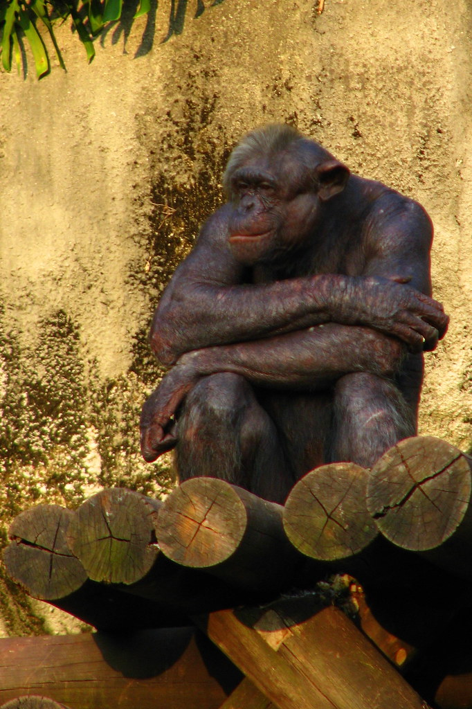 A monkey sitting in a zoo facility