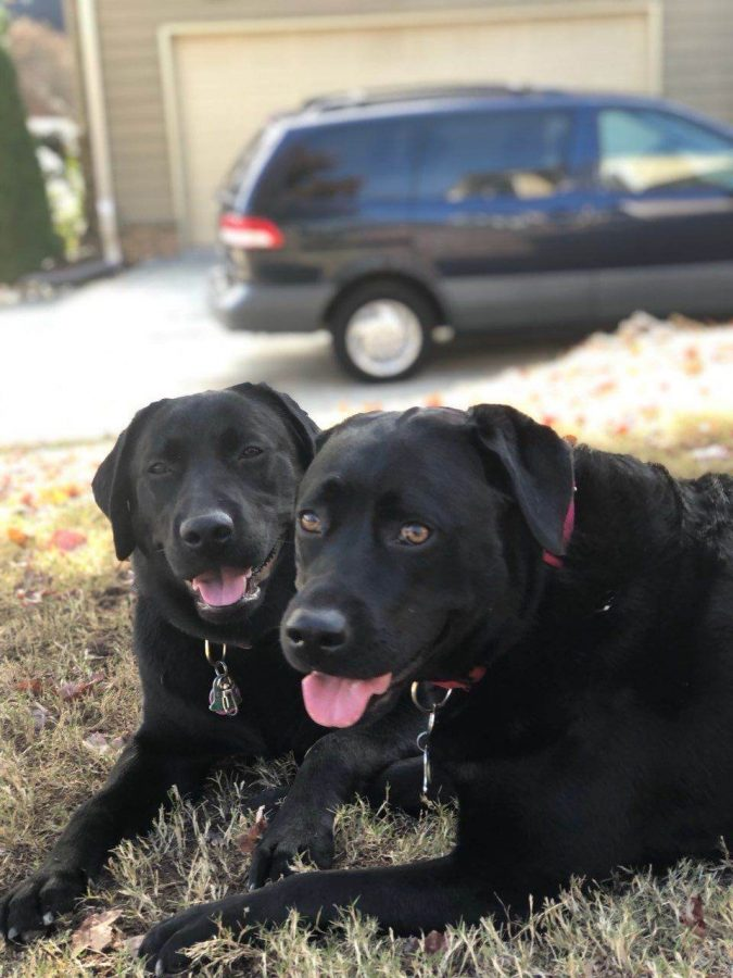 Live Longer With a Furry Playmate